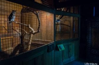 Вид внутри совиного домика