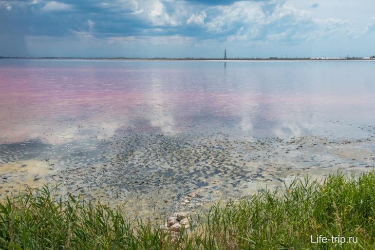 Розовое озеро Сасык-Сиваш вКрыму: где находится, фото