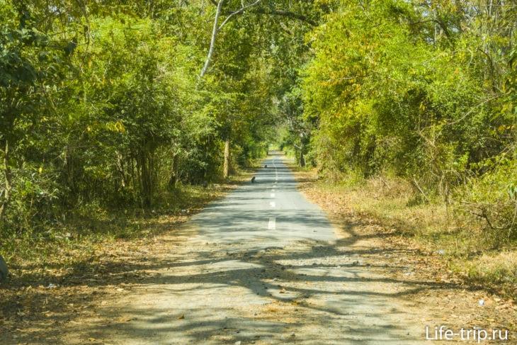 Дорога в сторону птичьего питомника