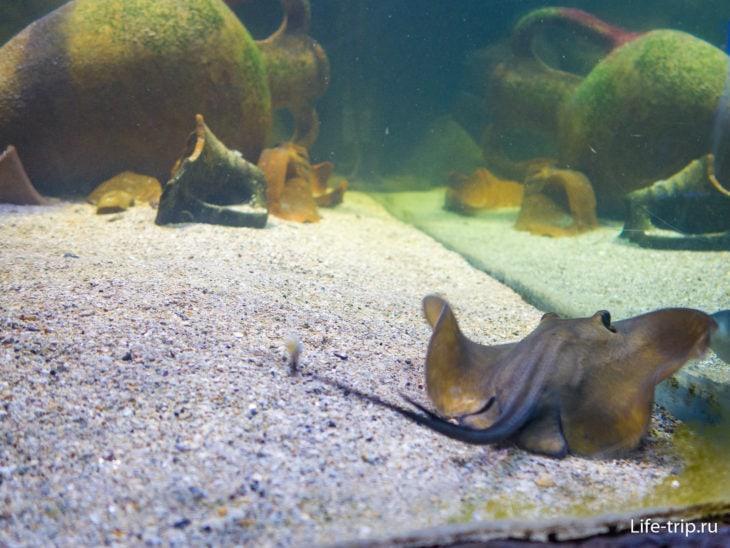 Алуштинский Аквариум - рыбы в летающей тарелке