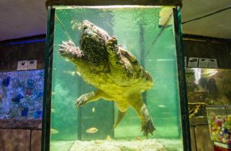 Треугольный аквариум для огромной черепахи