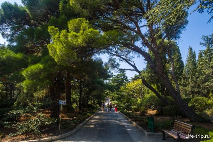 Форосский парк в Крыму - лечебный лес