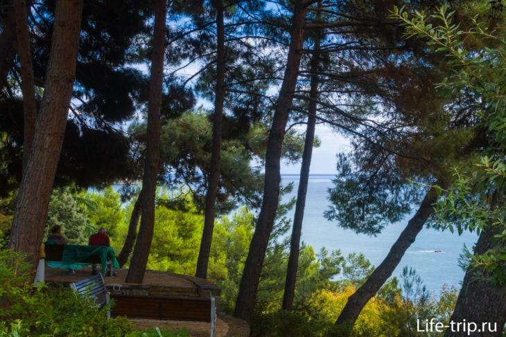 Сад ароматов - скамейки в хвойном лесу