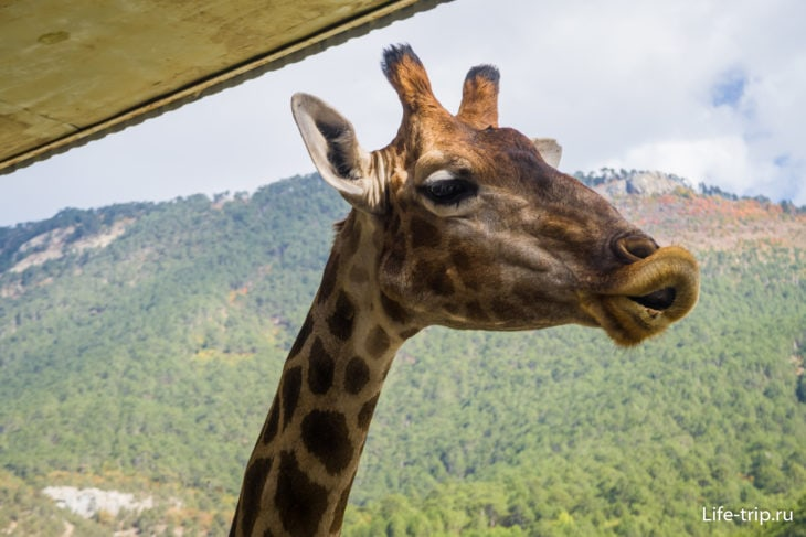 Зоопарк Сказка в Ялте - цена и как добраться