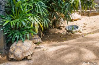 Рядом с аквариумами есть террариум для черепах