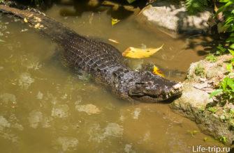 Если я правильно помню - морской крокодил. Плавает от устья к устью прямо по океану.