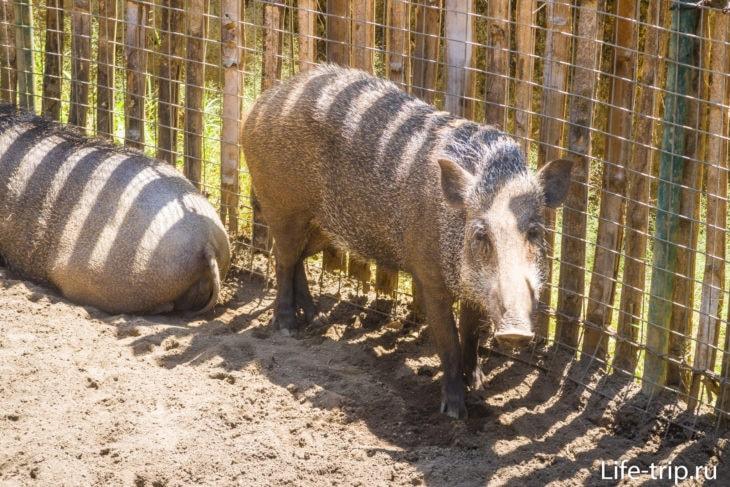 Зоопарк Бали - развлечение для всей семьи
