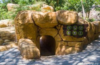 Вход в подземный тоннель под сурикатами.