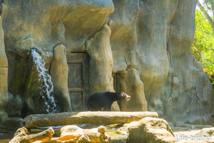 Малайский медведь. Здесь у меня сел аккум на камере и дальше - фото с телефона