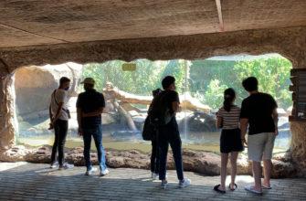 Рядом с амфитеатром есть закрытые вольеры для рептилий.