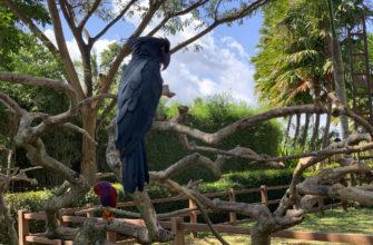 По желанию можно сфотографироваться с попугаями. Они тут повсюду.