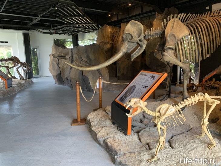 По пути вниз можно зайти в музей. Музей - это просто комната с макетами скелетов. Скучно, если честно