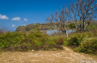 Тропа к пляжу начинается под деревом