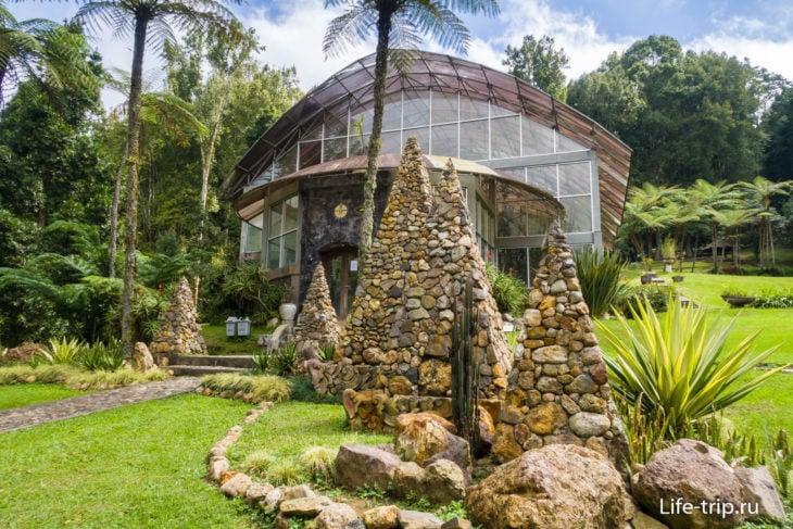 Оранжерея кактусов