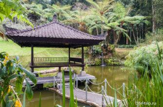 Водный сад с водопадиком на заднем плане