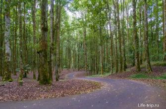 Дорога через дальний район сада