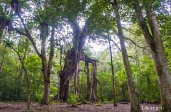 Гигантское дерево в глубине сада. Высота арки - метров 15