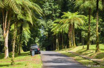 По саду можно ездить на своей машине и парковать ся в любом месте дороги.