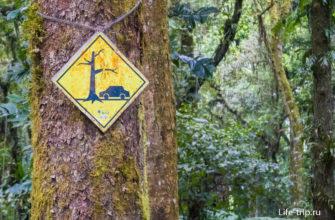На некоторых деревьях висят предупреждения