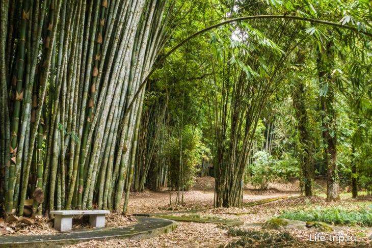 Бамбуковая роща с разными видами бамбуков