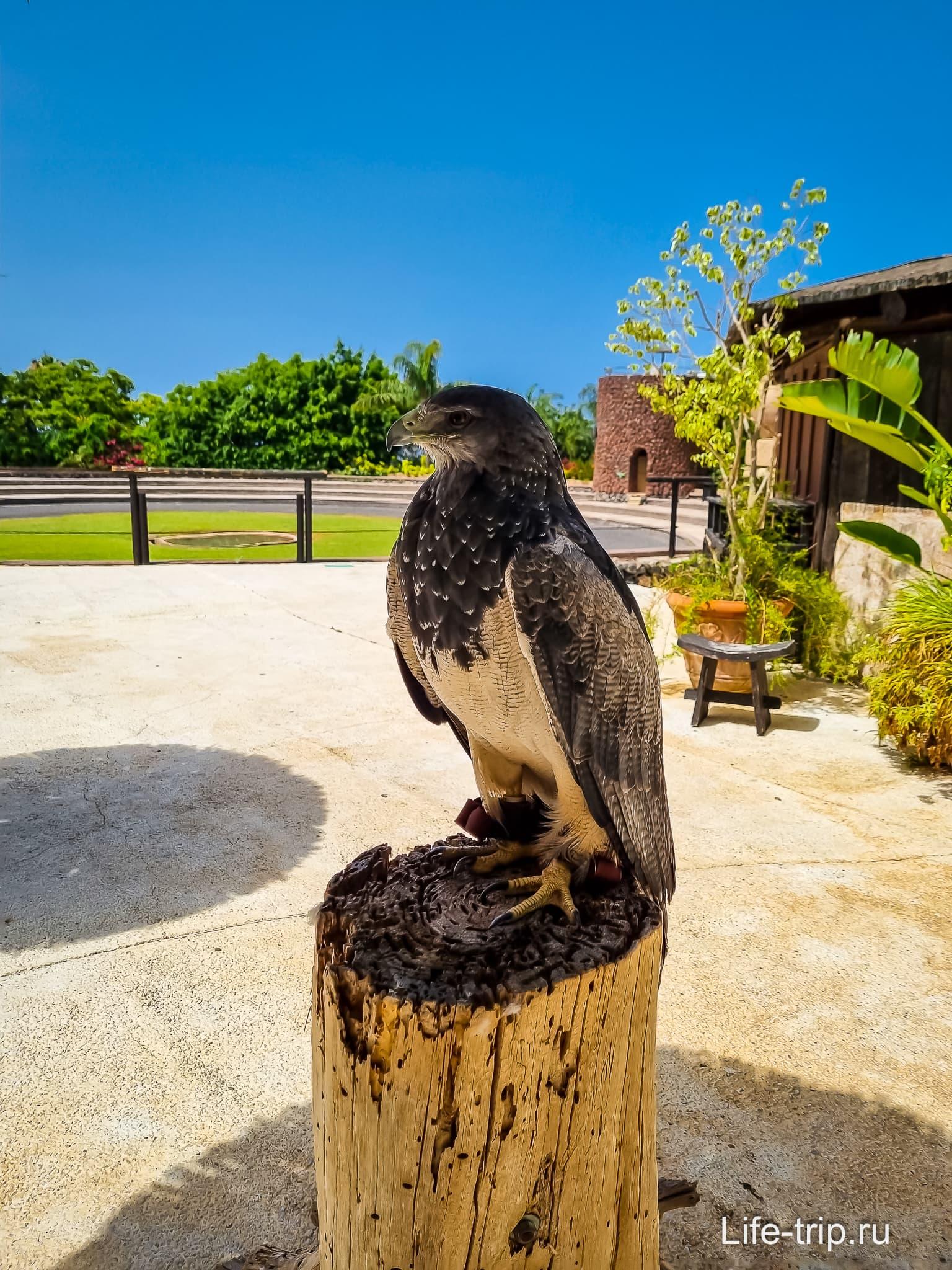 Зоопарк Jungle Park на Тенерифе